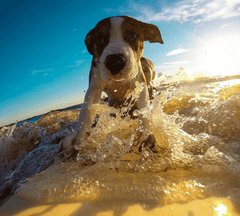 Dog surfing on a yellow board.