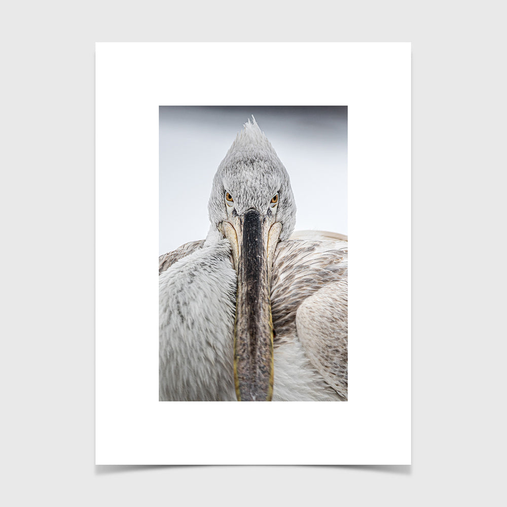 Load image into Gallery viewer, Pelican Stare