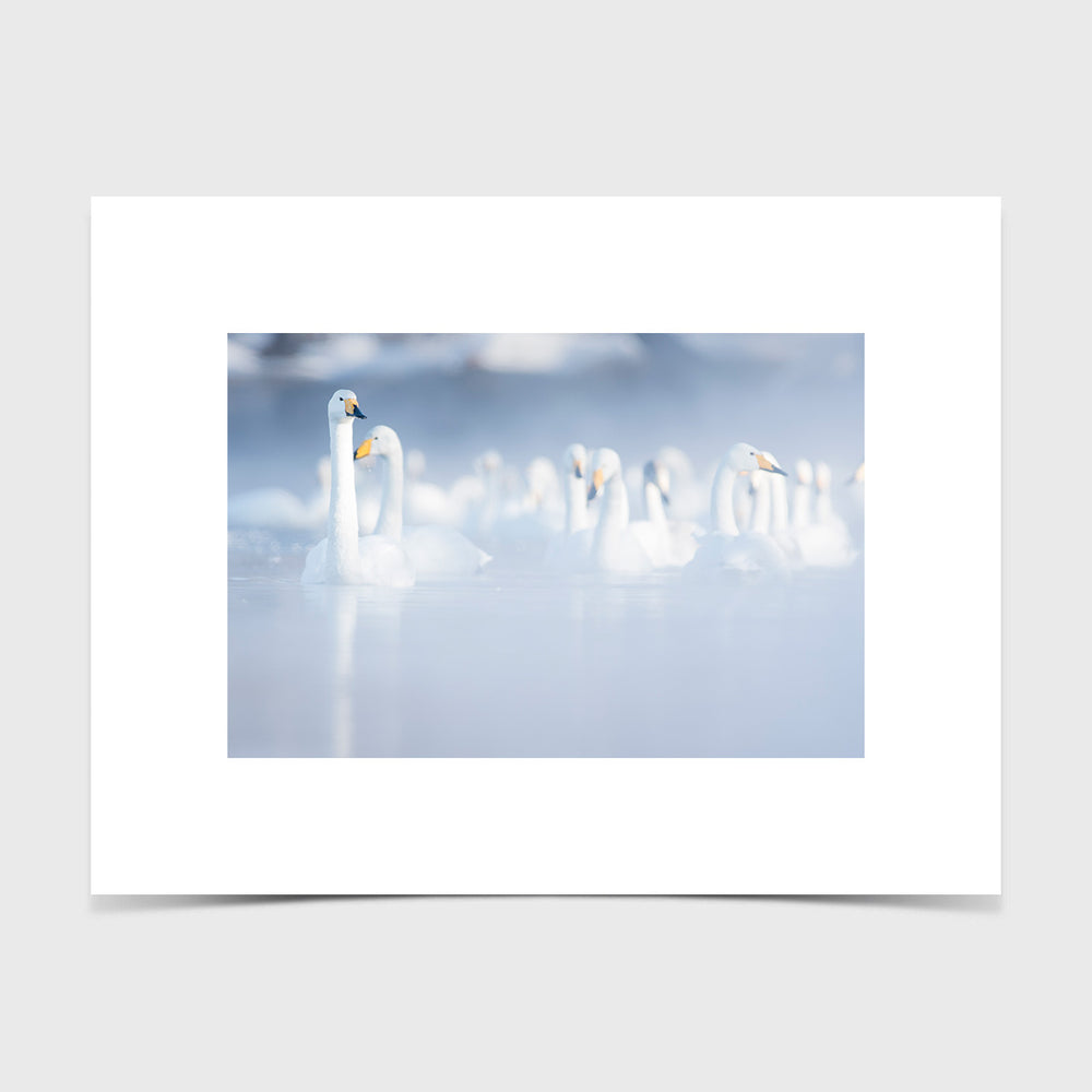 Load image into Gallery viewer, Swans in Fog