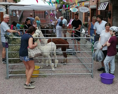 Lots of people enjoyed our alpaca day here at Fibrehut on Saturday 6th July 2019