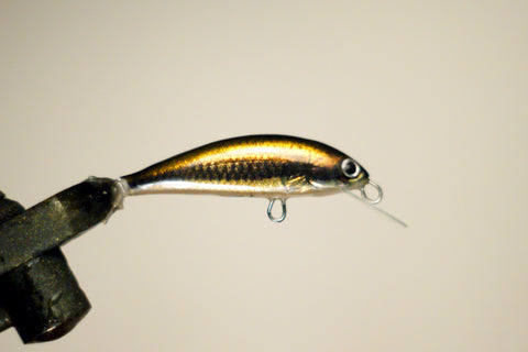 Shiner minnow 50 mm