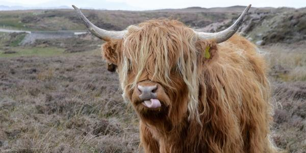 Get Your Cowlick Under Control