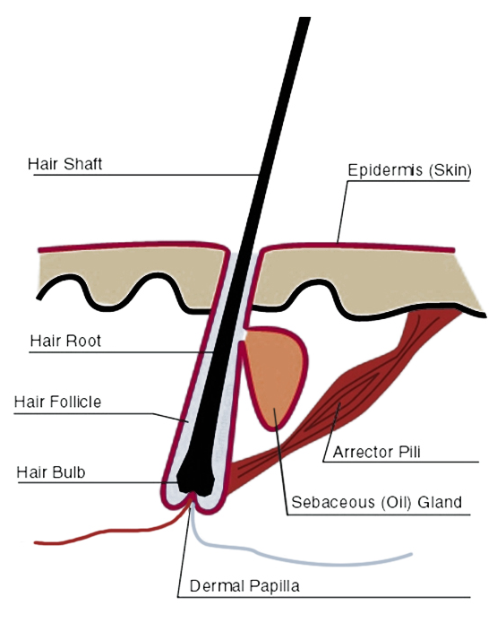 mens hair thickeness
