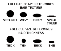 hair follicles men