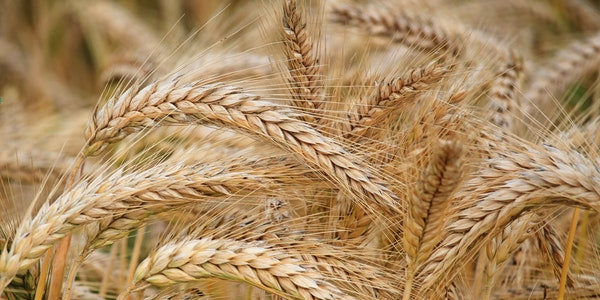 How Hydrolyzed Wheat Protein Strengthens Men's Hair