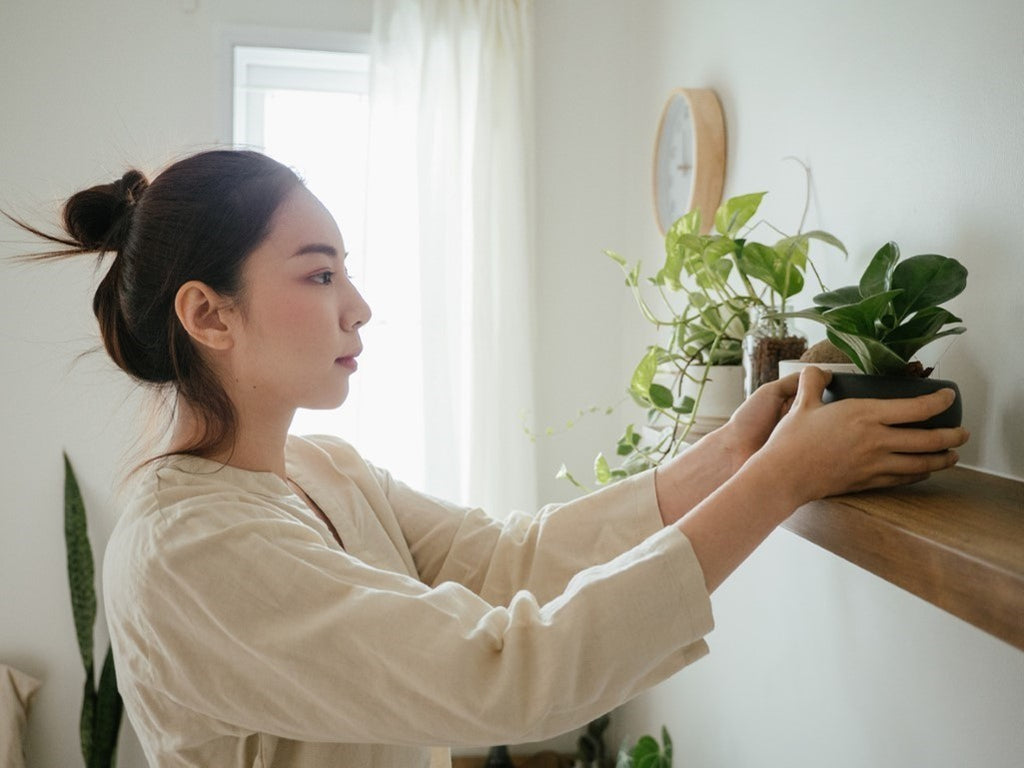 House Plants for Beginners: According to Your Parenting Style