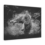"Black & White Tiger Canvas Wall Art 24"" x 18"" Gallery Wrapped Giclée Print"