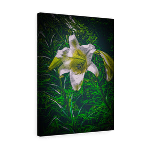 "Easter Lily Canvas Giclée 18"" x 24"" Gallery Wrapped Print"