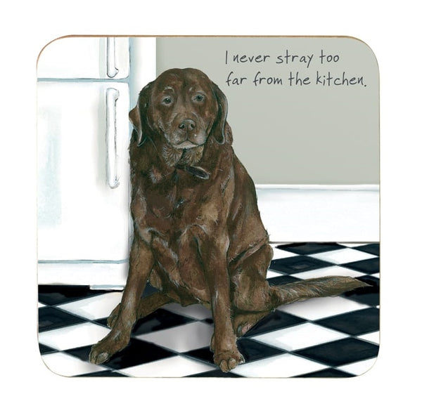chocolate labrador sat on chequered kitchen floor with caption 'I never stray too far from the kitchen'
