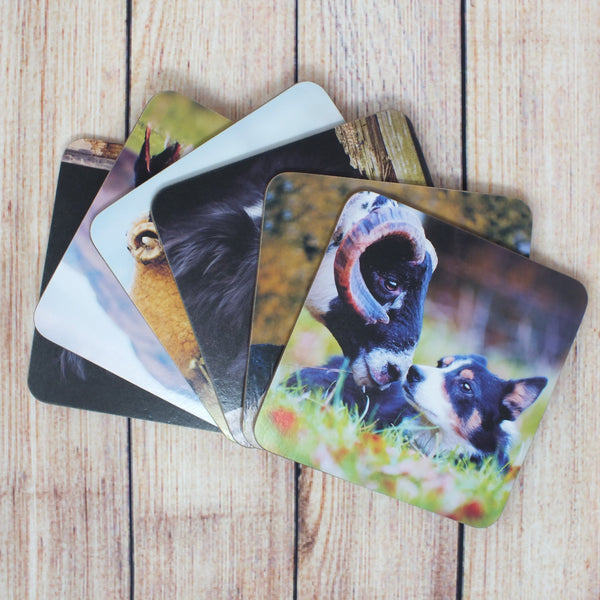 set of 6 collie coasters - all in a different design
