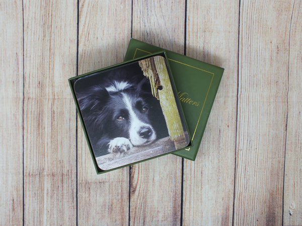 Set of 6 Border Collie Coasters