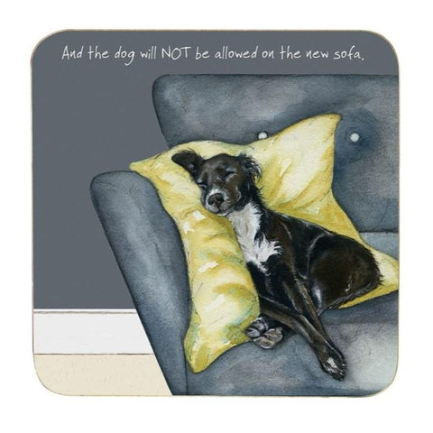 coaster with black and white lurcher on sofa