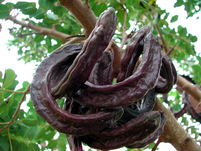 Carob or chocolate: What is the difference?