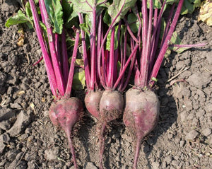 Beet - Sweetheart