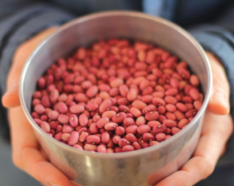 Dry Bean (Bush) - Red Peanut