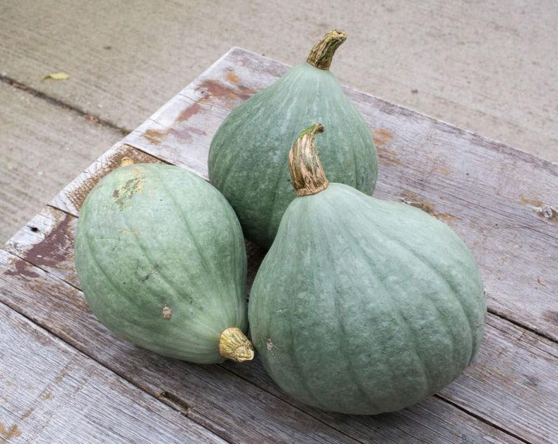 Squash (Winter) - Blue Ballet