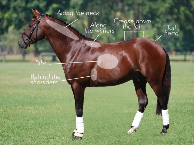 FREE Fact Sheet - Equine Body Condition Scoring Chart