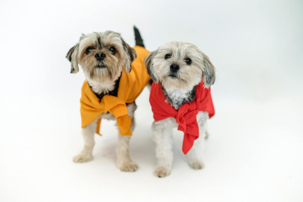 CLOTHES FOR SMALL/MEDIUM DOGS
