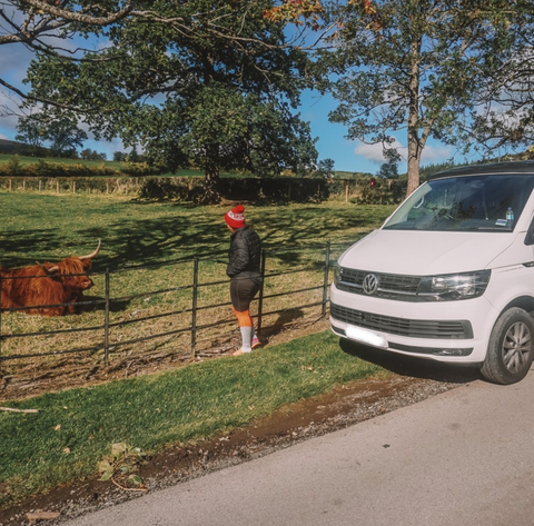 Pet Friendly Campervan Hire Glasgow visiting Highland Coo