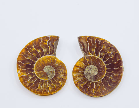 4cm ammonite pair -Madagascar