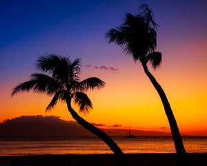 Hawaiian Beach Palms