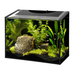 Aquen Ascent Frameless Aquarium Kit - 10 gal