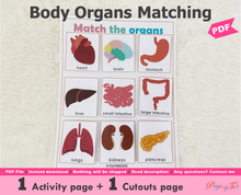 Load image into Gallery viewer, Body Organs Matching Activity