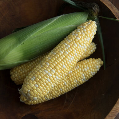 Sweet Corn | Certified Organic