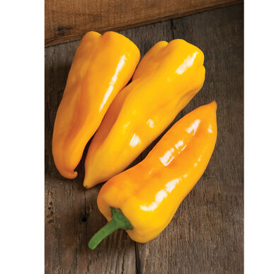 Sweet Pepper | Yellow