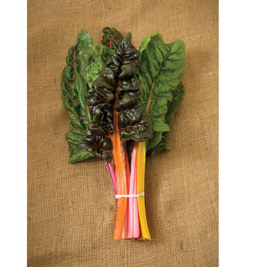 Swiss Chard | Rainbow