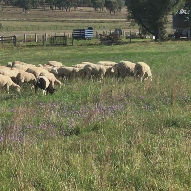 1/2 Long Paddock Lamb Pack $26/Kg * Special Order $50 Deposit - balance on delivery