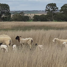 Load and play video in Gallery viewer, 1/2 Long Paddock Lamb Pack $26/Kg * Special Order $50 Deposit - balance on delivery