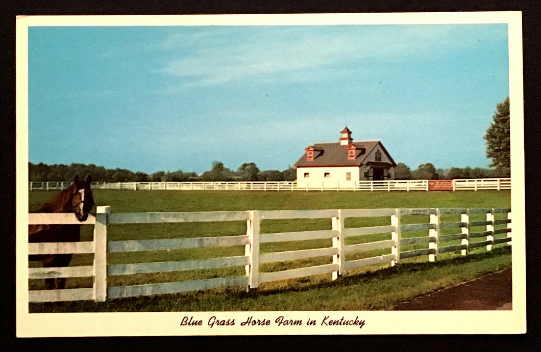 1960's Calumet Farm Lexington Kentucky Blue Grass Horse Farm Vintage Postcard