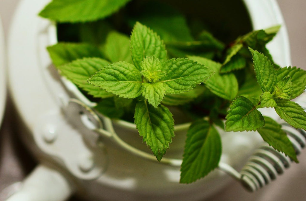 Herb of the Month: Peppermint