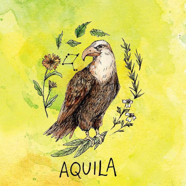 Aquila Allergy Elixir-Allergy Relief