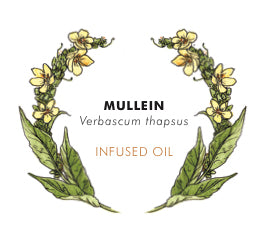 THS Mullein Flower Oil