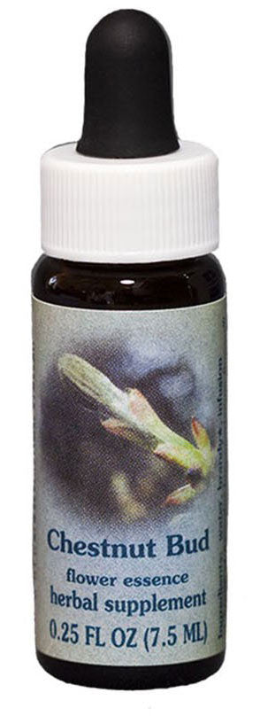 Chestnut Bud Flower Essence
