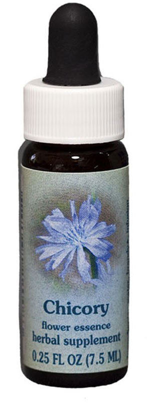 Chicory Flower Essence