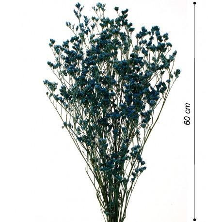 LIMONIUM PRESERVADO - CARMAN Showroom