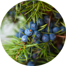 Load image into Gallery viewer, Juniper Berry Essential Oil