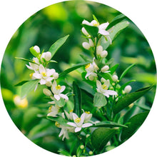 Load image into Gallery viewer, Neroli Essential Oil