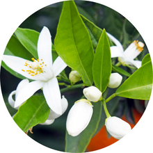 Load image into Gallery viewer, Neroli Fleurs sur Petitgrain Essential Oil