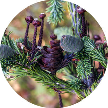 Load image into Gallery viewer, Fir, Siberian Essential Oil
