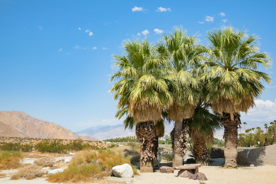 Travel Guide to Palm Springs, California