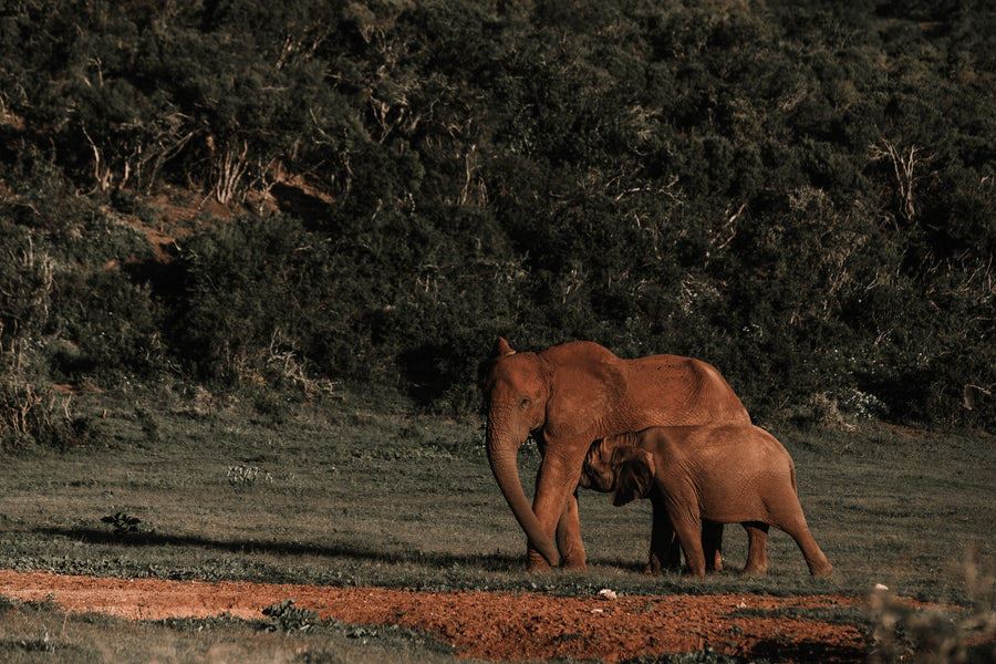 South Africa: Knysna forests and mythical elephants