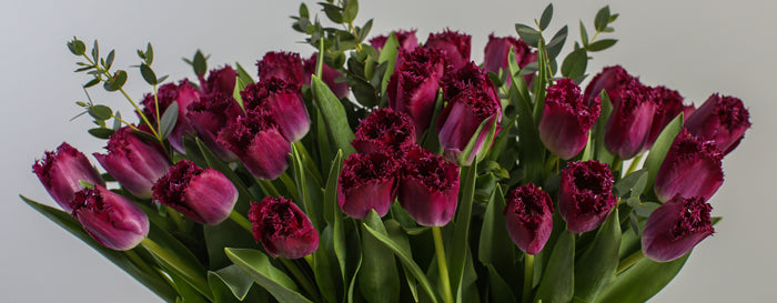 British tulips grown by Love Delivered