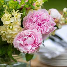 Love Delivered Peony