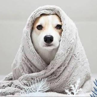 Winter Care Tips For Dogs