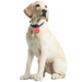 Digital Pet ID Tag - petfeastindia