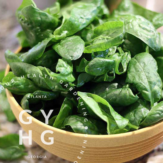 Monnopa Heirloom Low-Acid Spinach Variety
